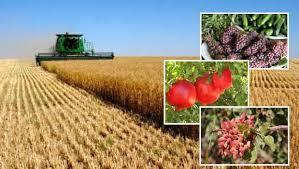 تحقیق درباره تولید محصولات کشاورزی