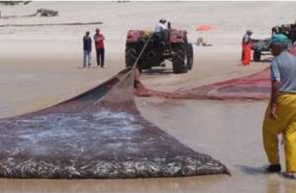 مطالعات امکان سنجی مقدماتی تولید تور ماهیگیری