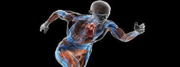 پاورپوینت مهندسی فاکتورهای انسانی و ارگونومی
