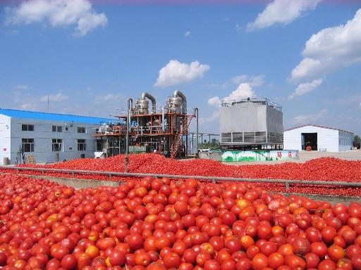 بررسی رب گوجه فرنگی و تکنولوژی و فراوری آن