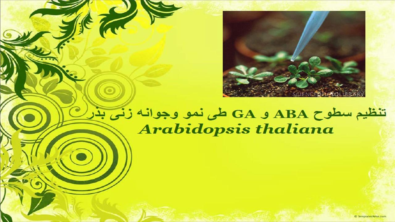 ارائه سمینار تنظیم سطوح ABA و GA  طی نمو و جوانه زنی بذر آرابیدوپسیس
